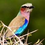 Wildlife in  Kenya's Dakatcha woodland is under threat from biofuel production