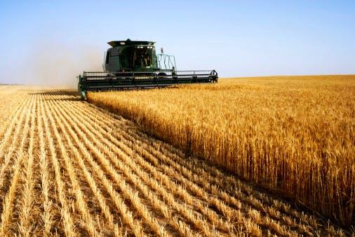farm agriculture grain