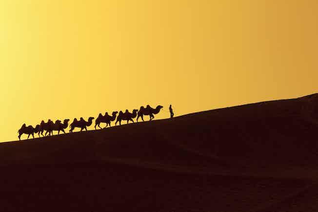 silk road camels