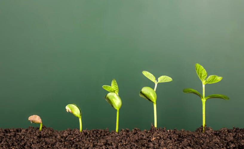 Row of plants from first seedling to sprouting leaves, illustrating growth