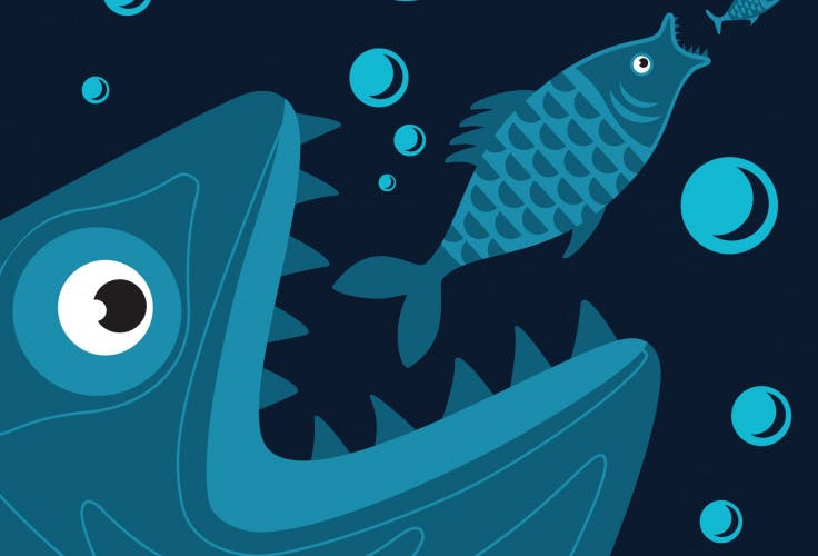 fish, M&A, takeover